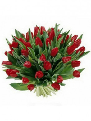 45 алых тюльпанов